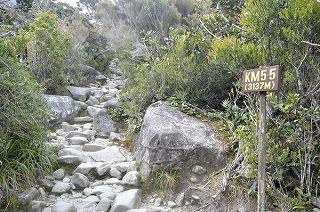 熱帯雨林の登山道