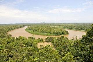 キナバタンガン川