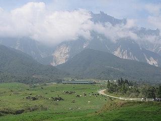 キナバル山の美しい景観を眺められるデサファーム